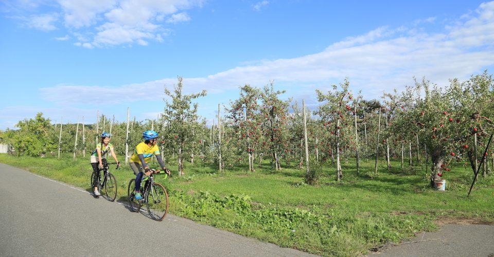 사과 밭(りんご畑)