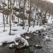 白銀の奥入瀬渓流スノーライド